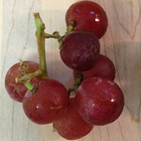 Math Picture Book: The Grapes of Math